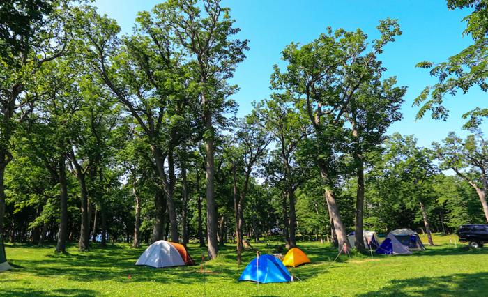 フリーサイトに点在するテント