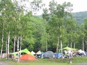 白樺の木々が生い茂る大自然の中でテントを張り、キャンプする様子