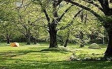 大きな広葉樹と広々した草原が広がる徳澤キャンプ場の様子