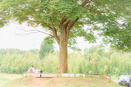 一番星ヴィレッジの大きな木