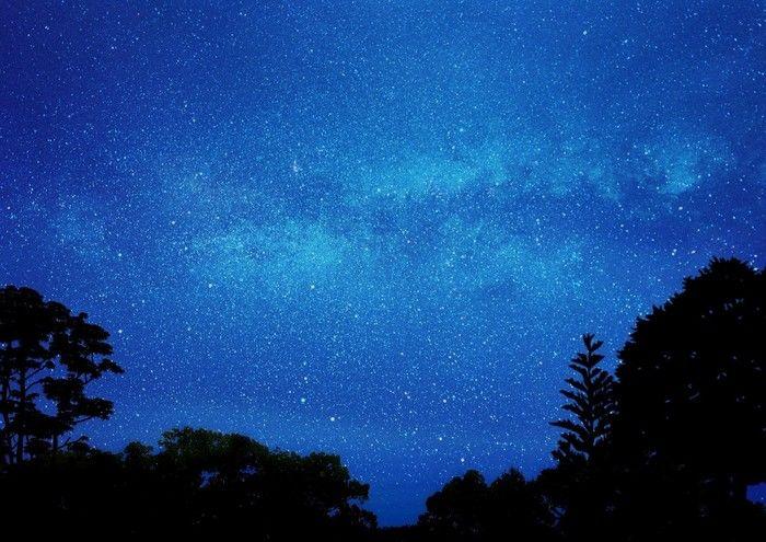 森林から眺める星空
