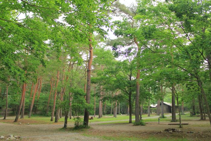 キャンプラビットのキャンプ場の様子