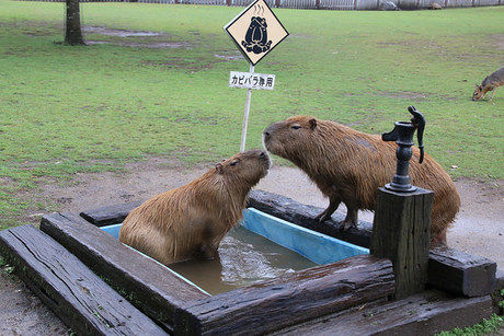 阿蘇ファームランド内のふれあい動物王国