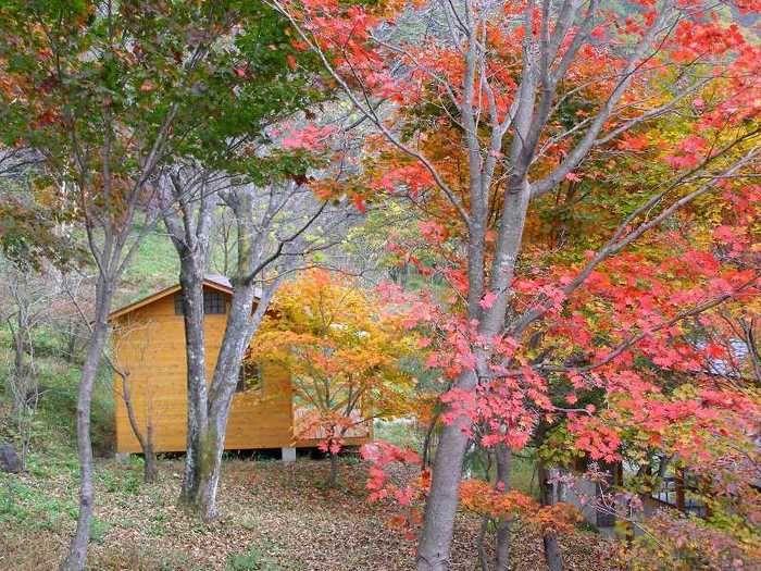 紅葉する林間にあるコテージ