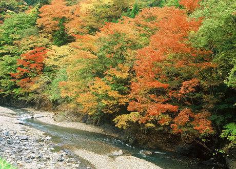 中津渓谷キャンプ場の川沿いの紅葉した紅葉