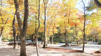 メープル那須高原キャンプグランドの紅葉した木々