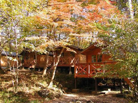 那須高原アカルパの紅葉した木々とコテージ