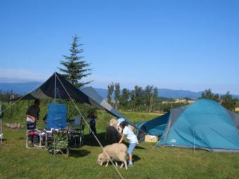 星に手のとどく丘キャンプ場で羊と戯れる子供