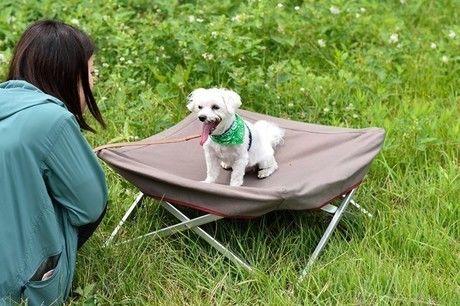 コットの上に座る犬