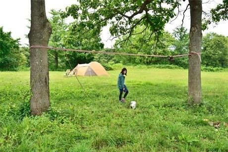 キャンプ場を駆け回る犬