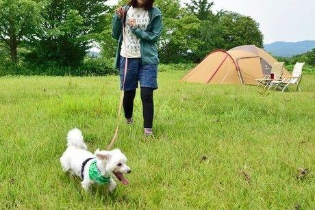 キャンプ場を散歩する犬
