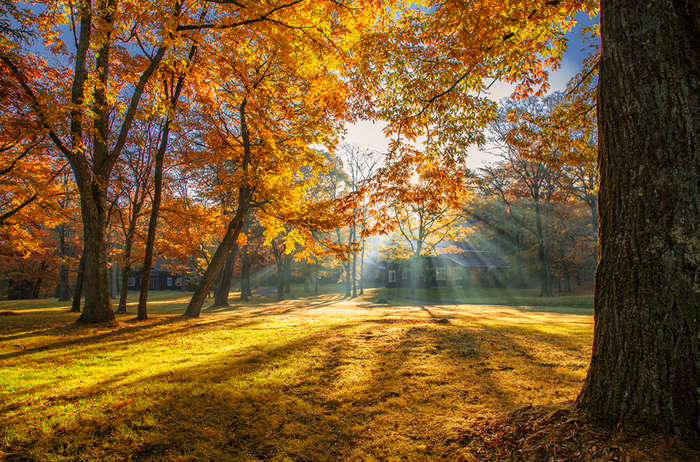 軽井沢の紅葉と木漏れ日