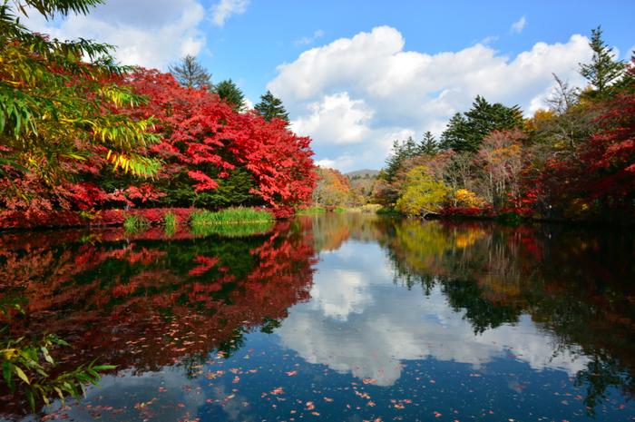 紅葉に染まる軽井沢の雲場池