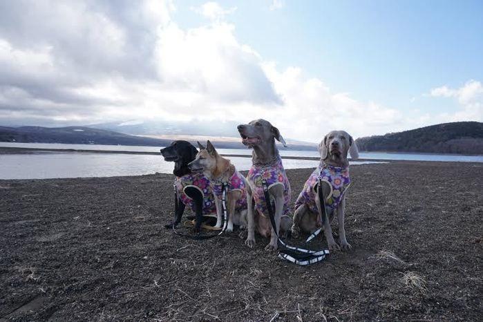 海辺を散歩する4匹の犬