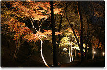 農村公園のライトアップされた紅葉
