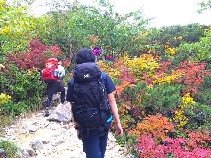 登山道を彩る鮮やかな紅葉の様子