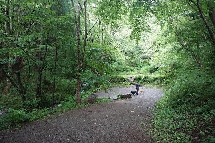 大自然の中で犬と戯れる男性