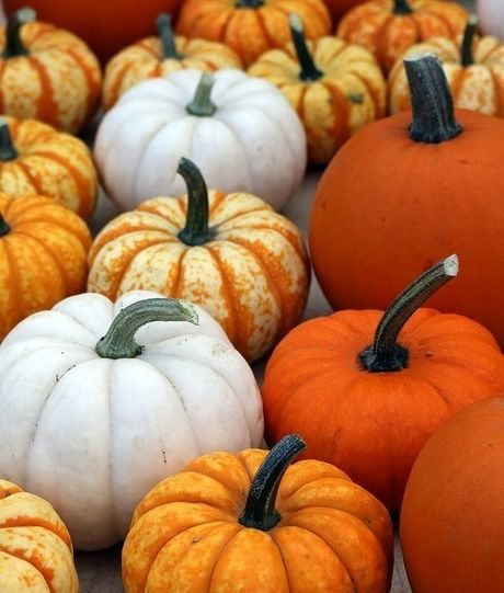 オレンジ色のかぼちゃ