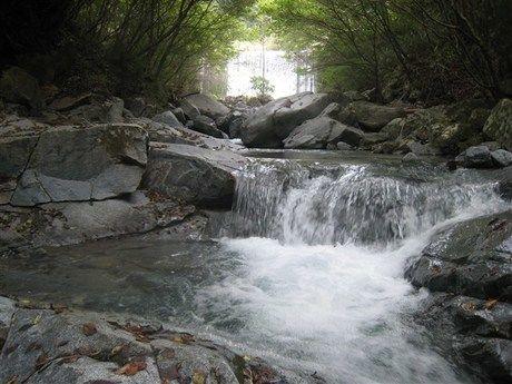 道志村の森を流れる滝