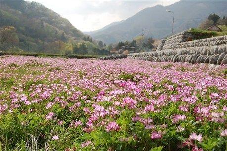 花の森オートキャンピアの鮮やかな草花畑