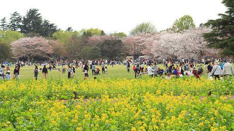 国営昭和記念公園で憩う人々