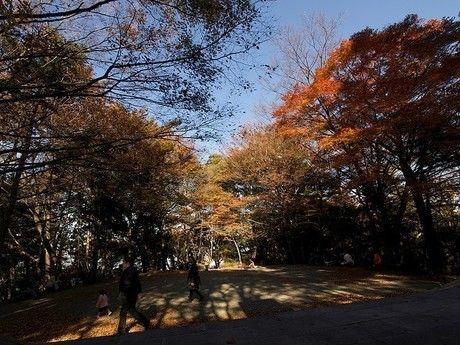紅葉した高尾山