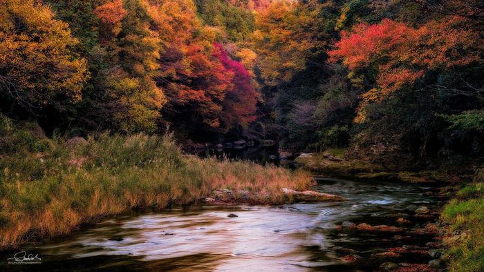 武蔵嵐山渓谷の紅葉