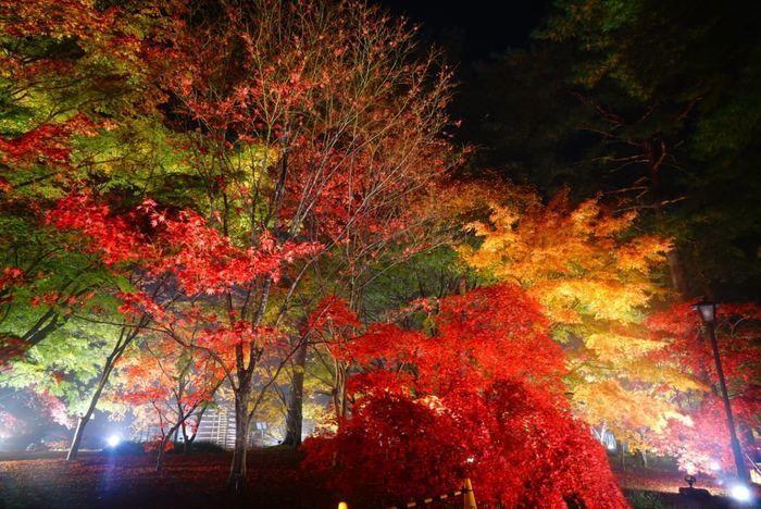 国営武蔵丘陵森林公園の紅葉ライトアップ