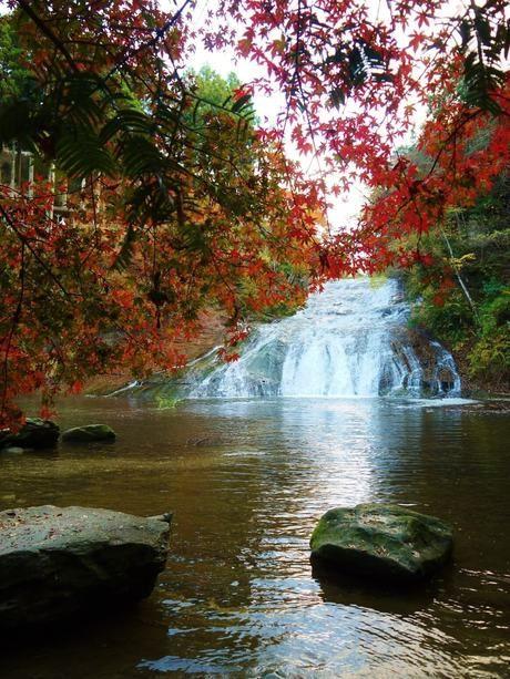 養老渓谷の紅葉の景色