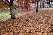 落ち葉がたくさんの冬のキャンプ場の様子