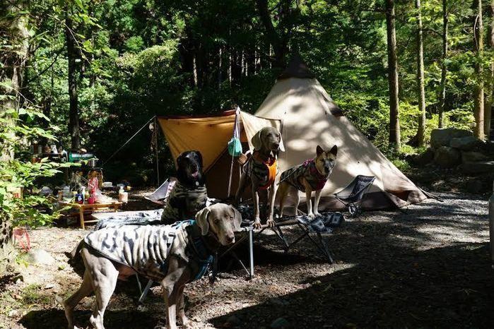 道志の森キャンプ場のキャンプサイトと犬