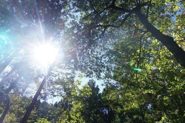 道志の森キャンプ場の森と木漏れ日