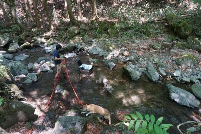 道志の森キャンプ場内の川と犬の散歩