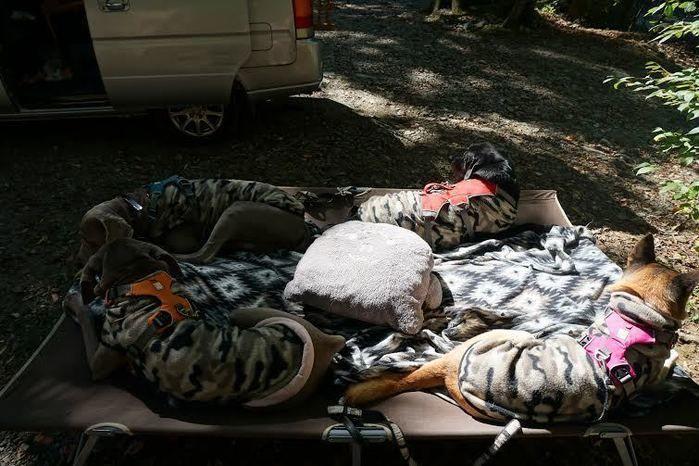 道志の森キャンプ場で昼寝する犬