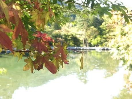 道志の森キャンプ場の紅葉
