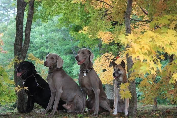 道志の森キャンプ場の森と犬