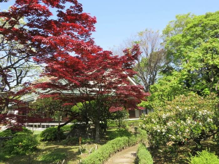 江東区の清澄庭園の様子