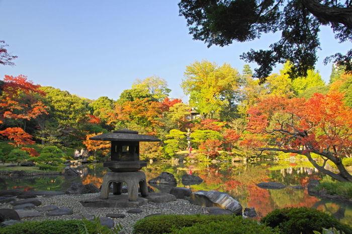 北区の旧古河庭園の紅葉