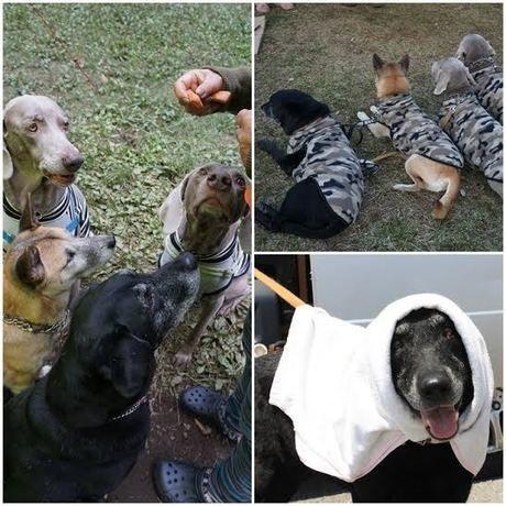 キャンプ場での犬の様子