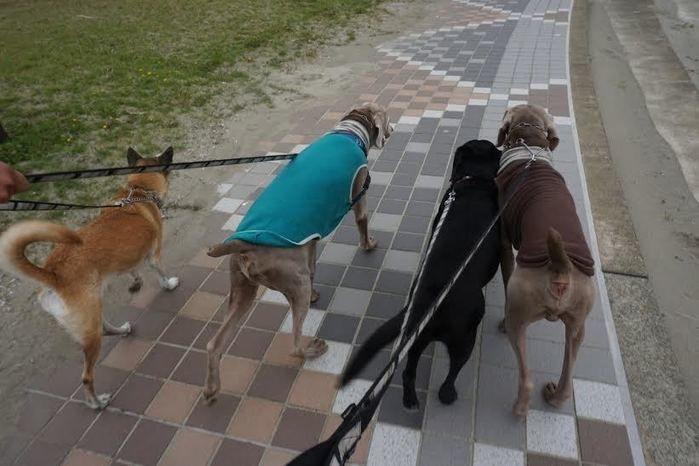 キャンプに参加する犬