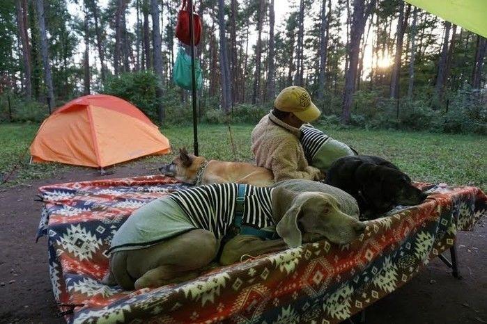 しまドルトンの上で寝転ぶ人と犬