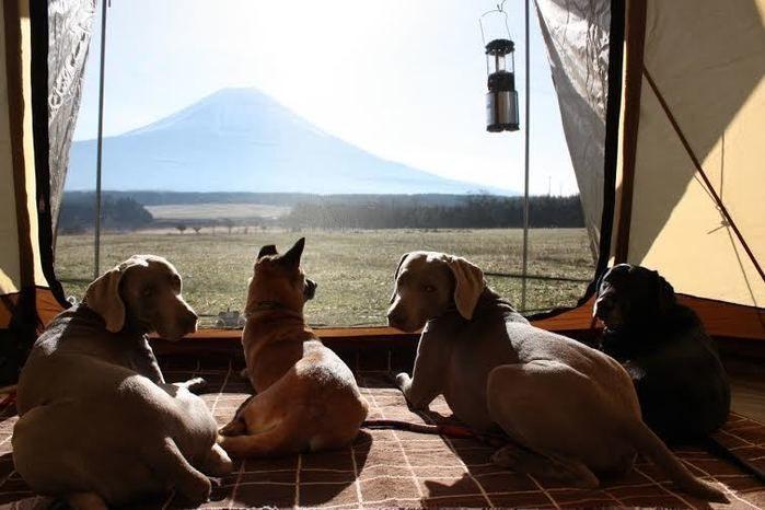 テントの中から外の風景を眺める犬
