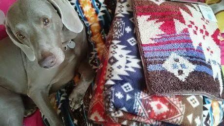 犬としまドルトンシリーズの綿が入ったマット