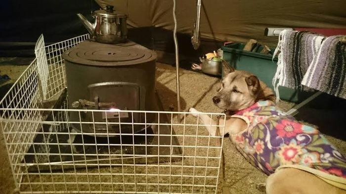 室内でストーブの横に伏せる犬