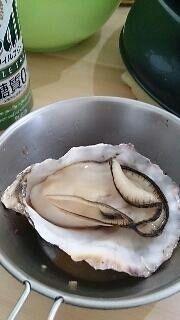美味しそうな牡蠣