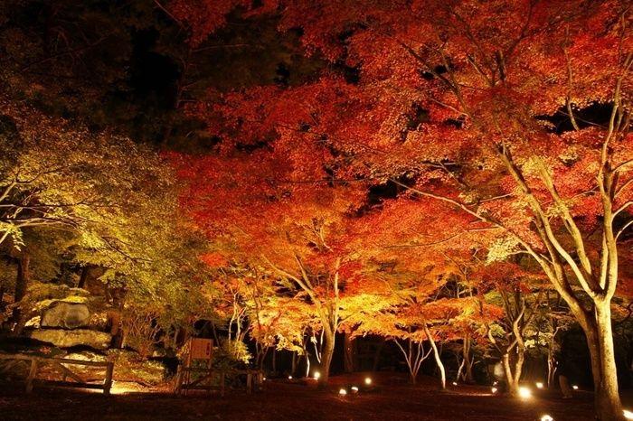 月の石公園のライトアップされた紅葉