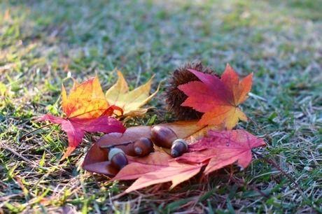 紅葉した落ち葉とドングリ