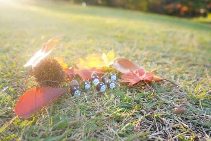 紅葉した落ち葉とどんぐりのトトロ
