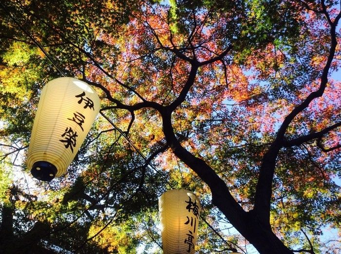 上野恩賜公園の紅葉と提灯