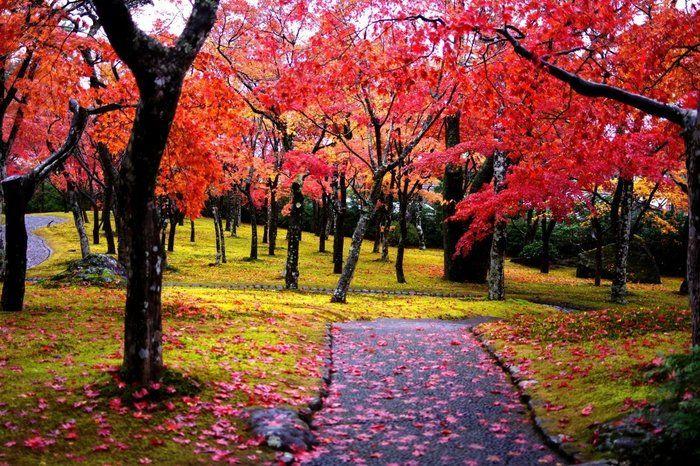 箱根美術館の真っ赤な紅葉